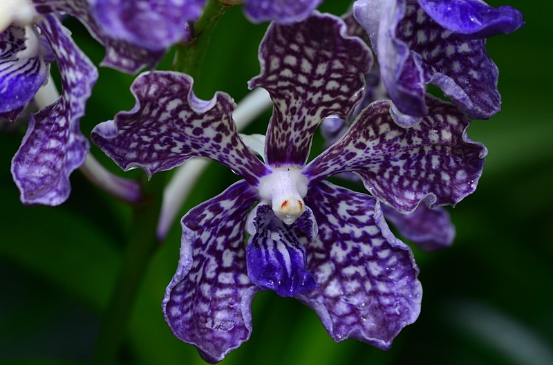 may 13 3601 purple orchid