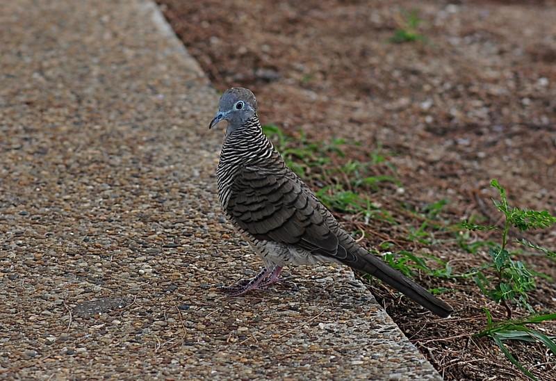 may 16 5374 dove