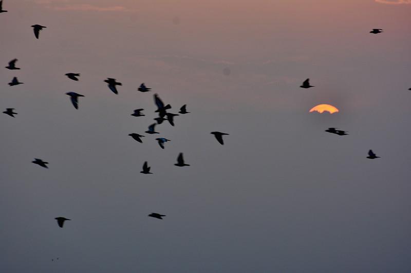 may 18 2623 sun birds