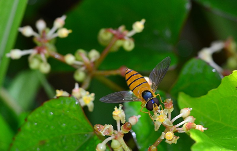 may 19 3741 hover fly