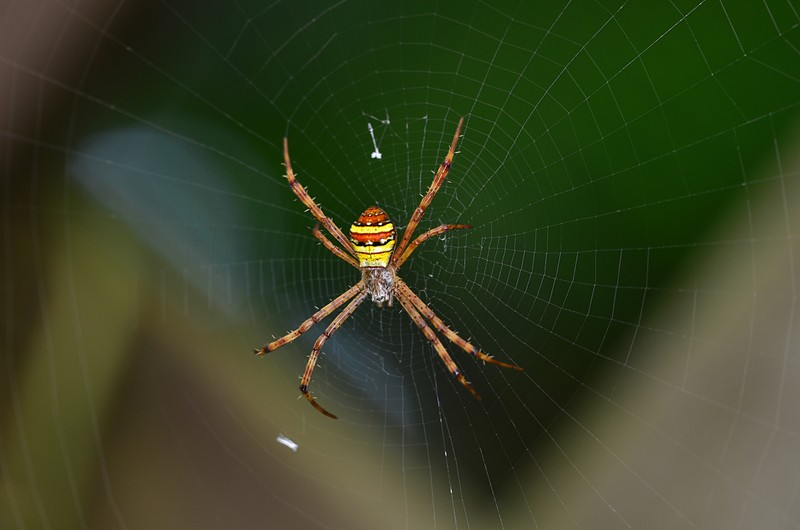 may 20 3823 argiope