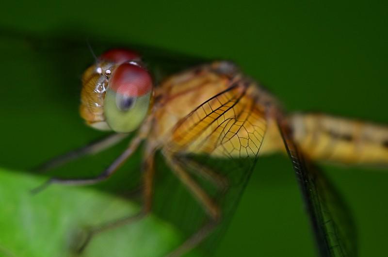 may 20 3854 dragonfly eye