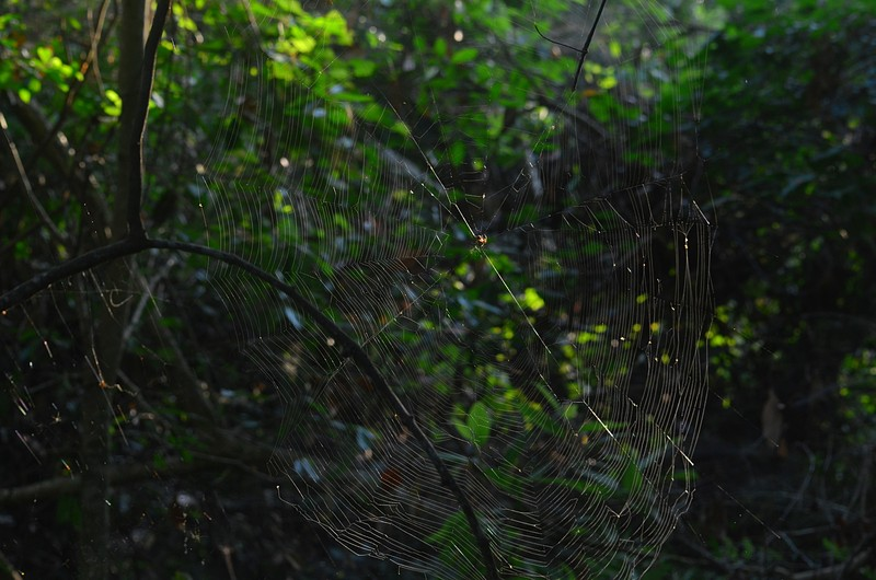 may 21 7639 sunlight web