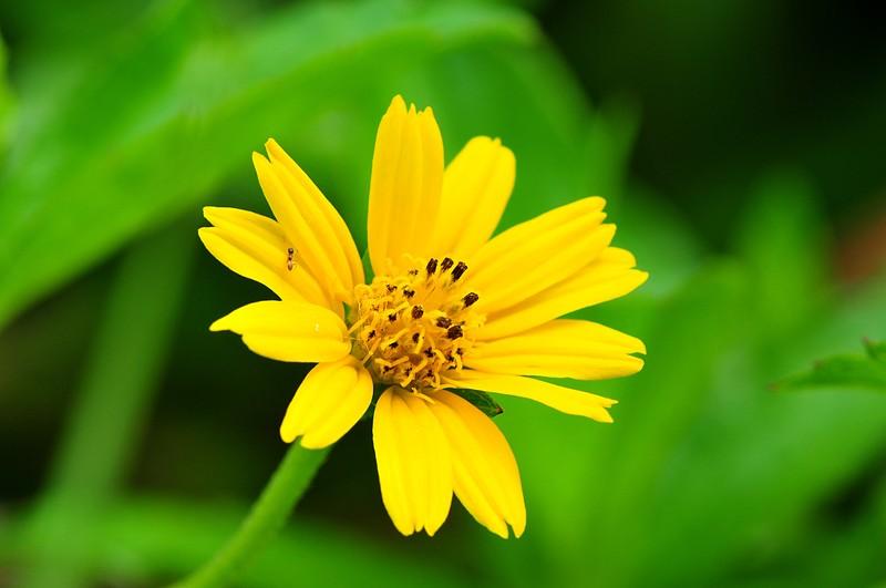 may 22 7701 color yellow