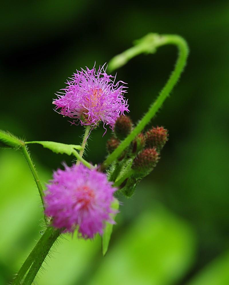 may 22 7822 purple flower