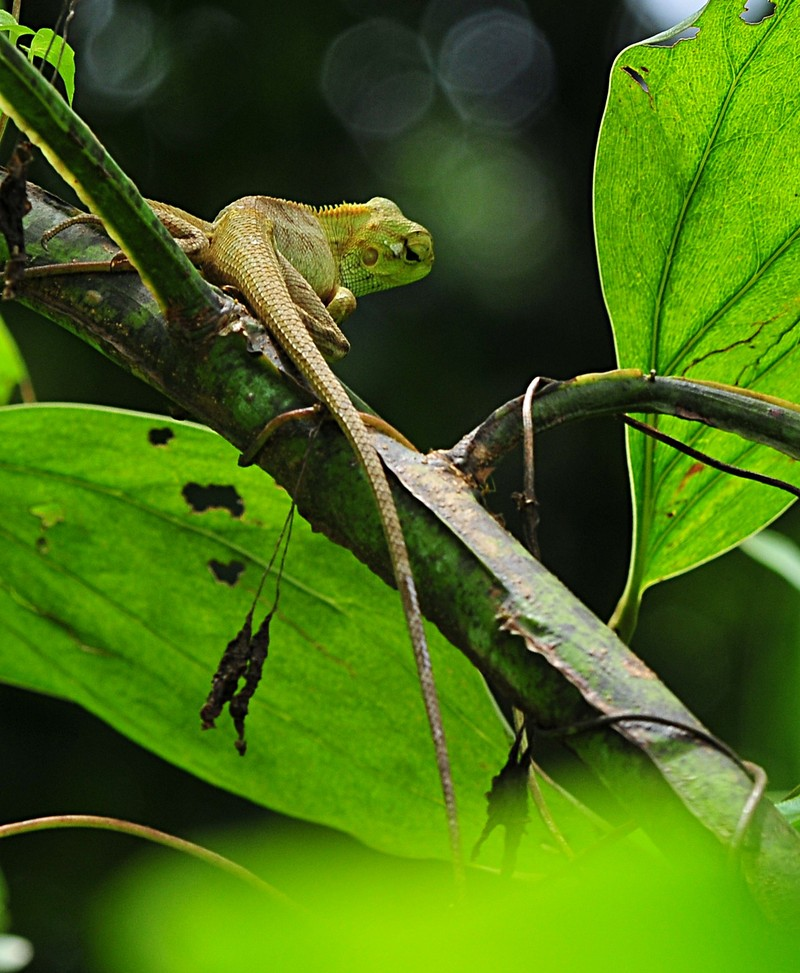 may 22 7843 gecko