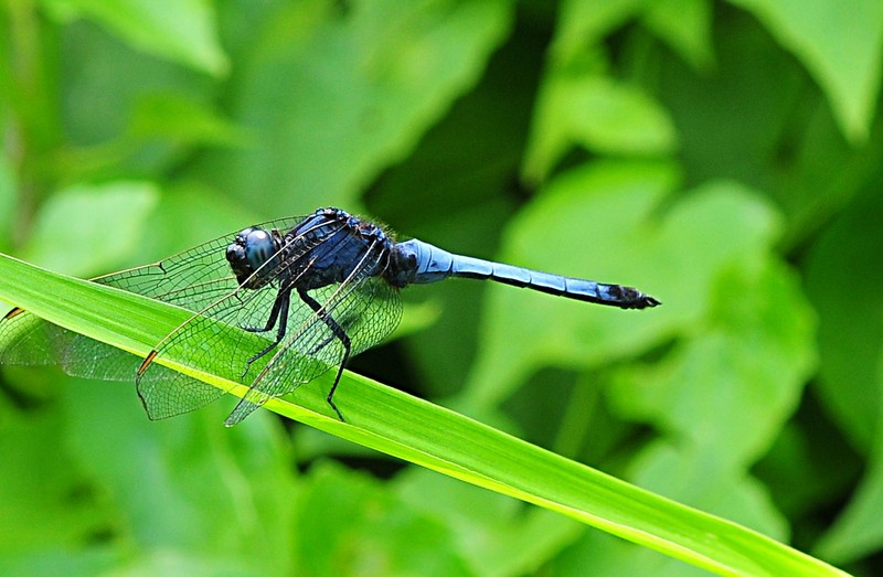 may 22 7845 blue dfly