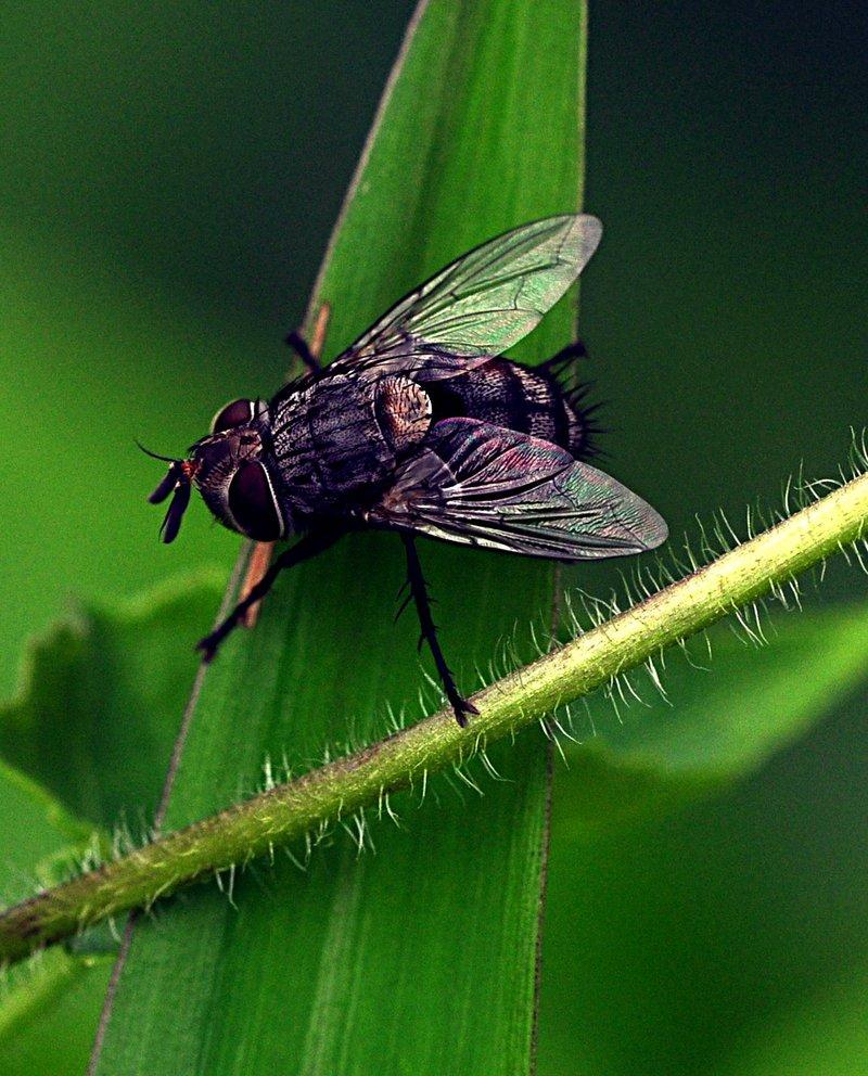 may 23 3812 fly