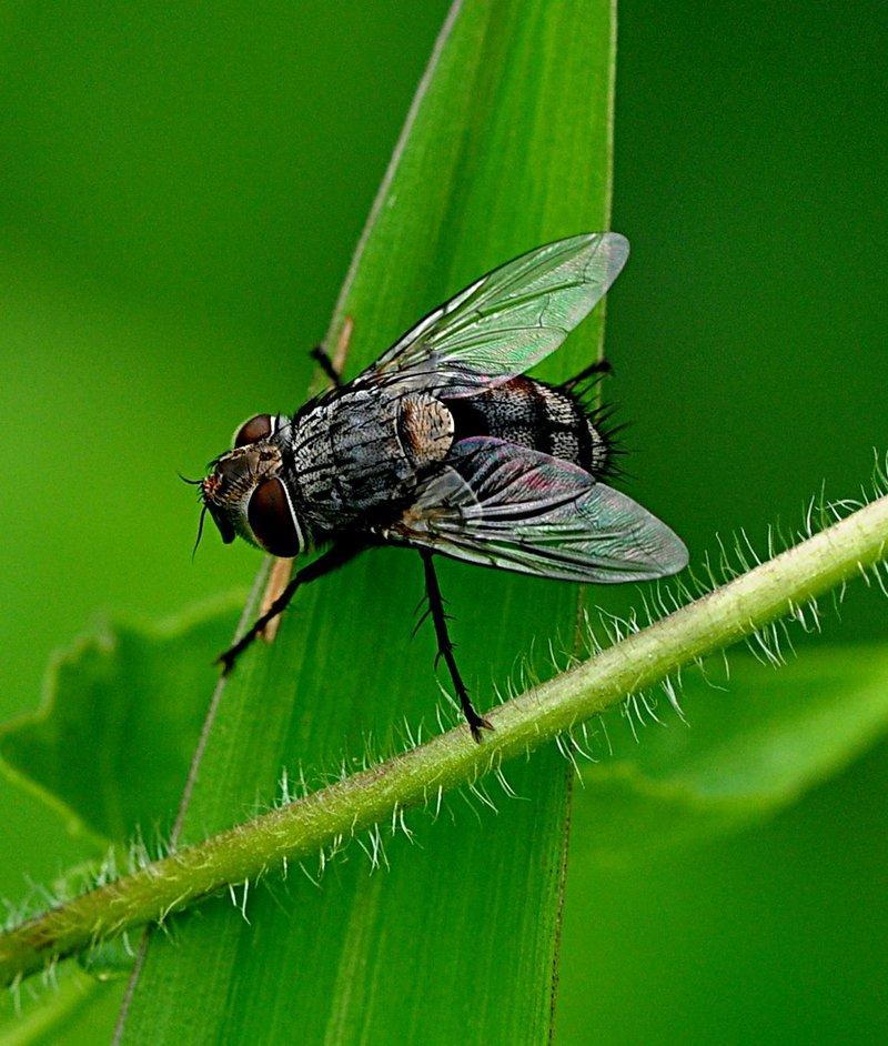 may 23 3826 fly