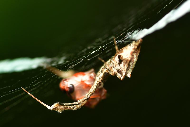 may 24 1147 spider prey