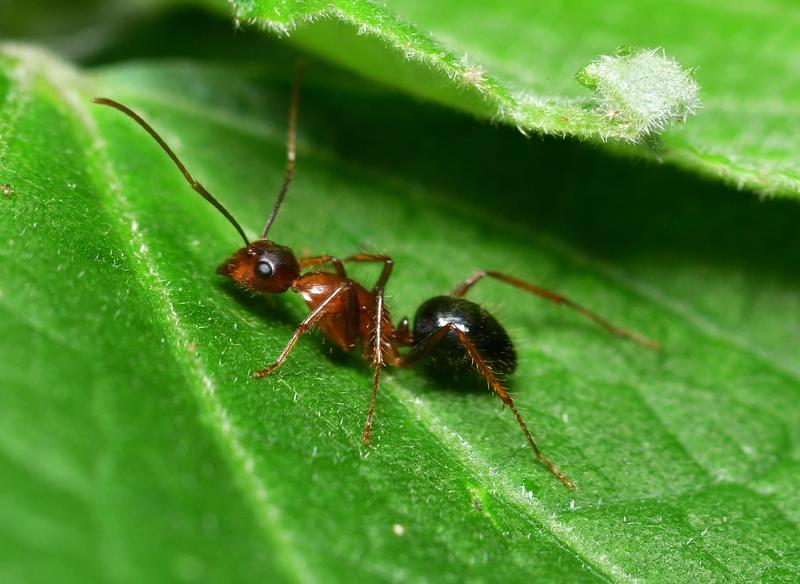 may 24 1150 ant