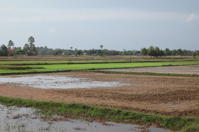 may 24 2966 rice field