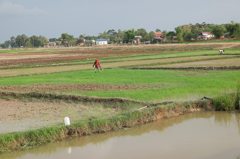may 24 2989 rice field workers