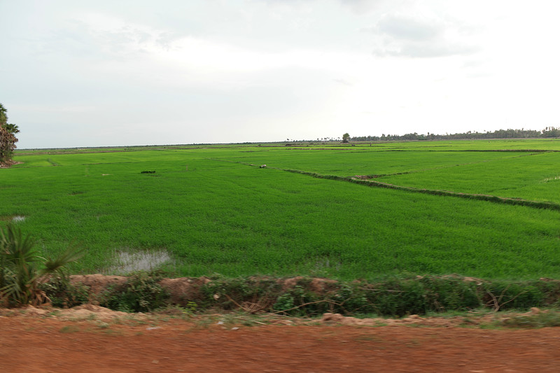 may 24 3042 new rice