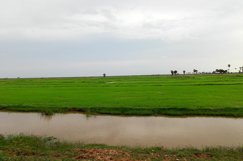 may 24 3084 green rice