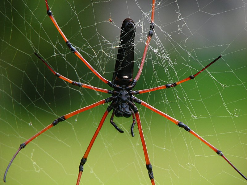 along came a spider essays Essays along the road with jesus all in one planning book the storyteller ser  along the delaware and raritan canal along came a spider audiobook cassette.