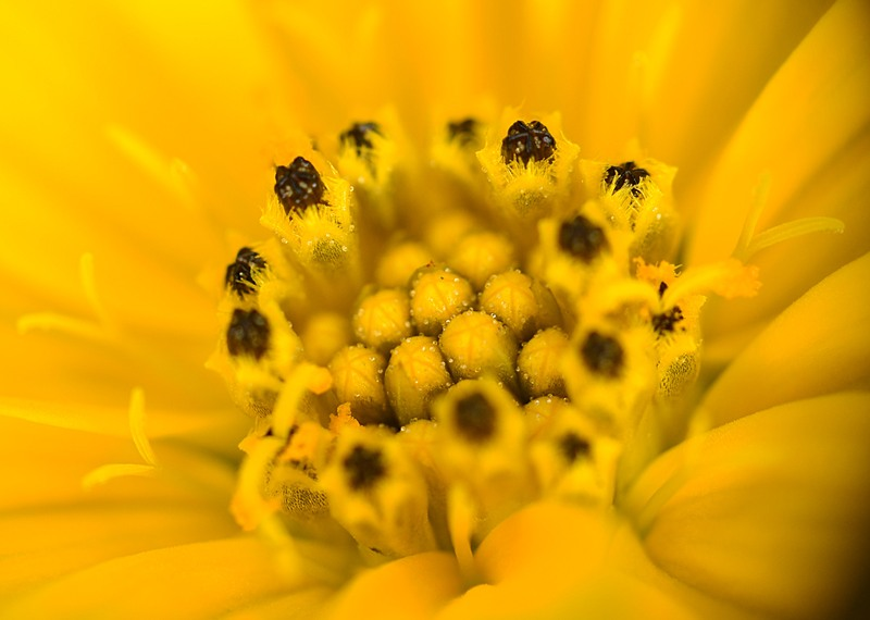 may 26 3970 inside yellow flower