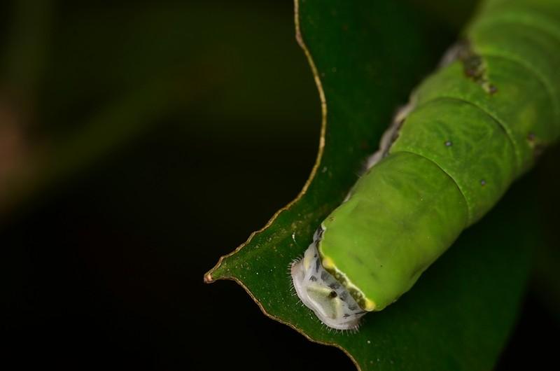 may 26 4012 caterpillar