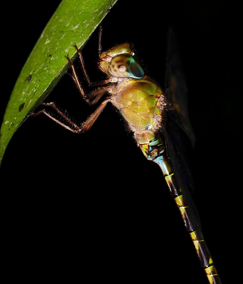 may 26 4021 dragonfly