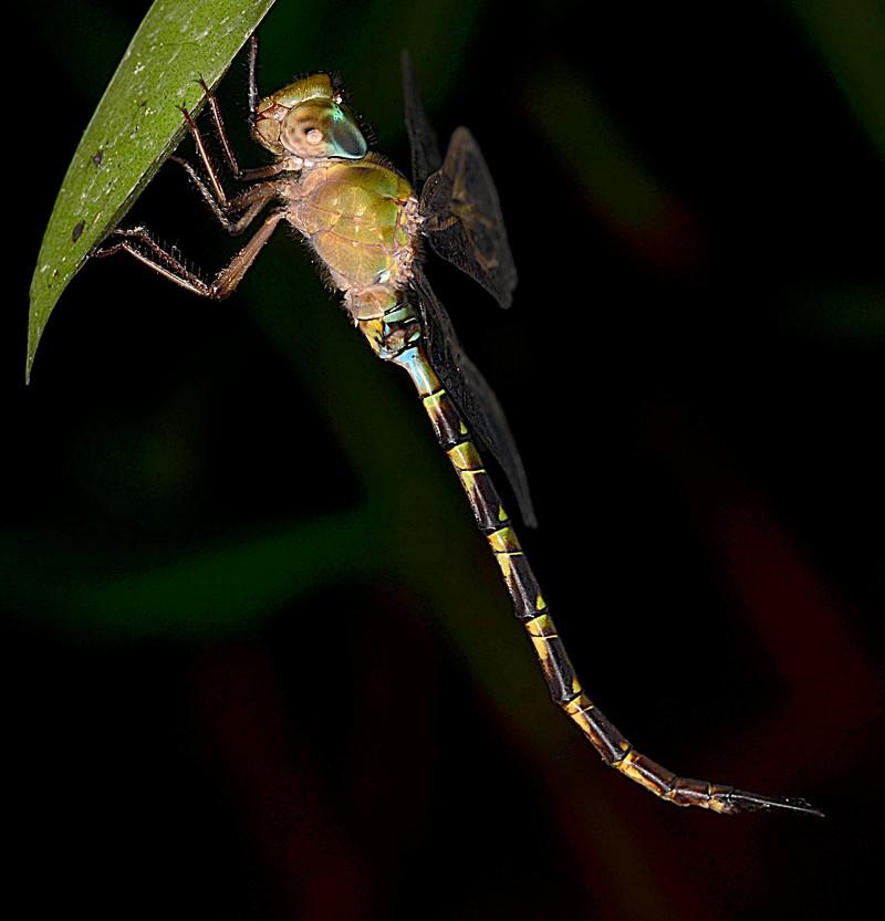 may 26 4022 dragonfly