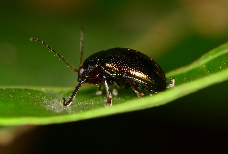 may 26 4056 black insect