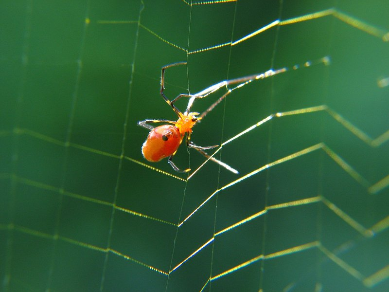 may 27 2372 argyrodes