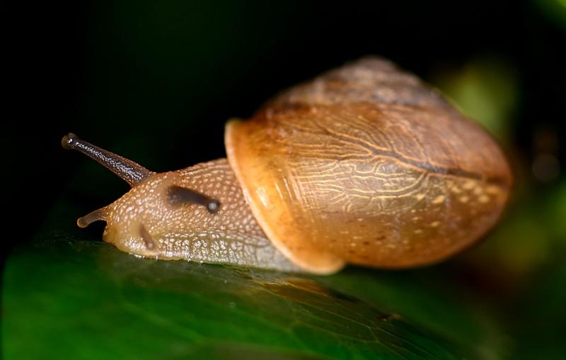 may 27 4085 snail