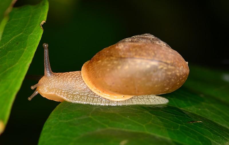 may 27 4093 snail