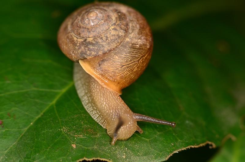 may 27 4107 snail
