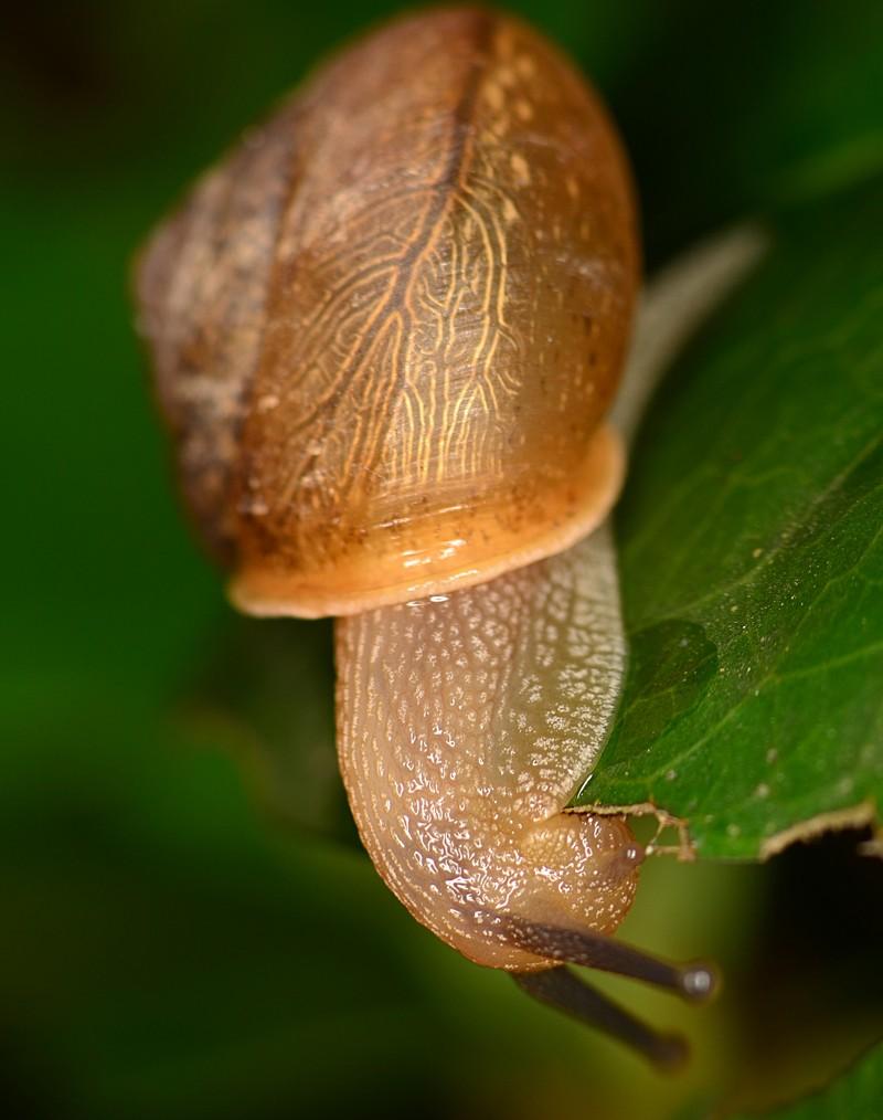 may 27 4118 snail