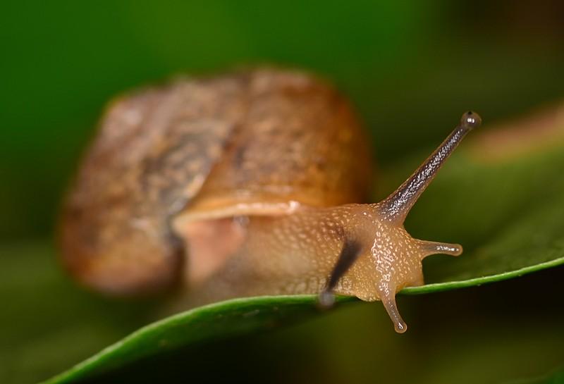may 27 4126 snail