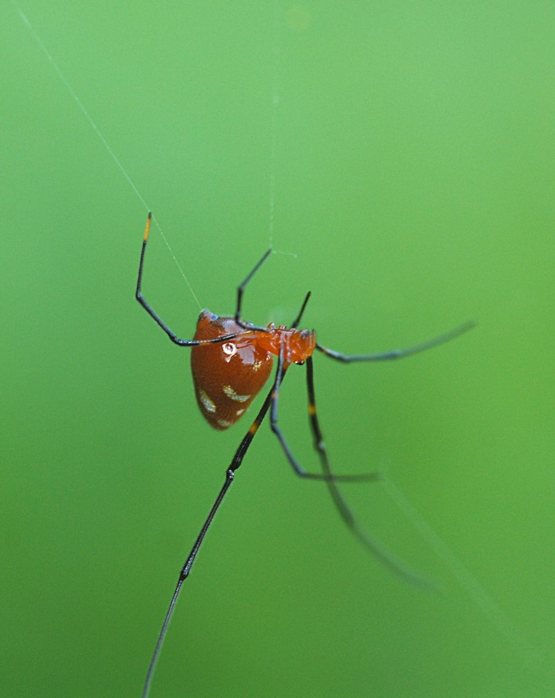 may 27 9431 argyrodes droplet