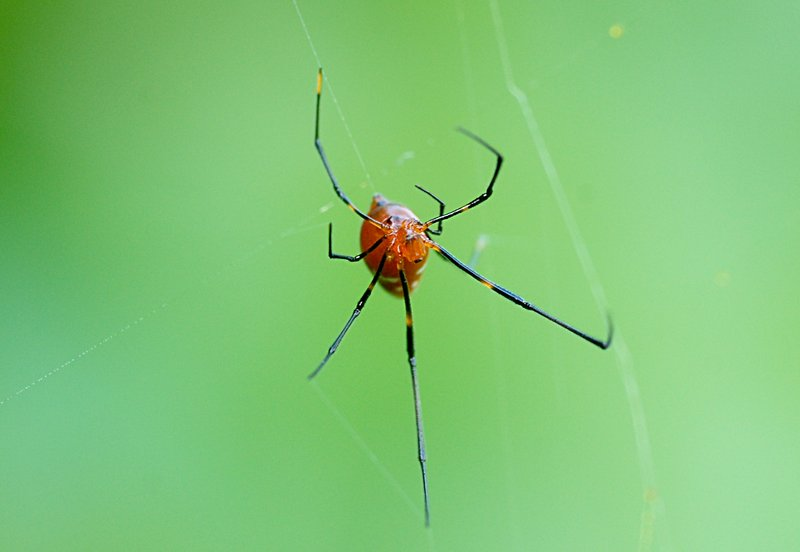may 27 9439 argyrodes