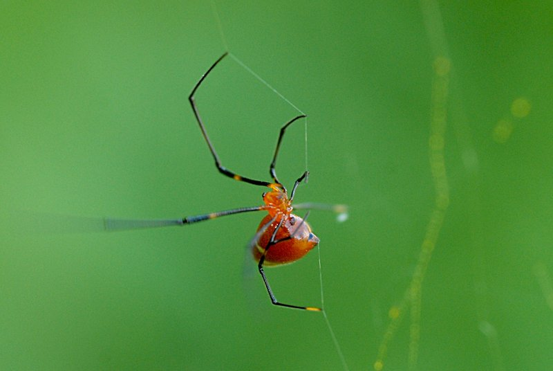 may 27 9474 argyrodes motion