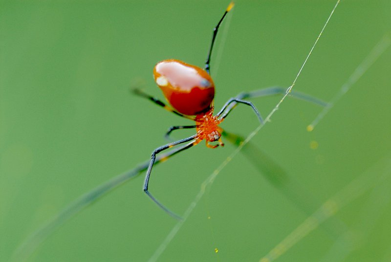 may 27 9492 argyrodes dull reflection