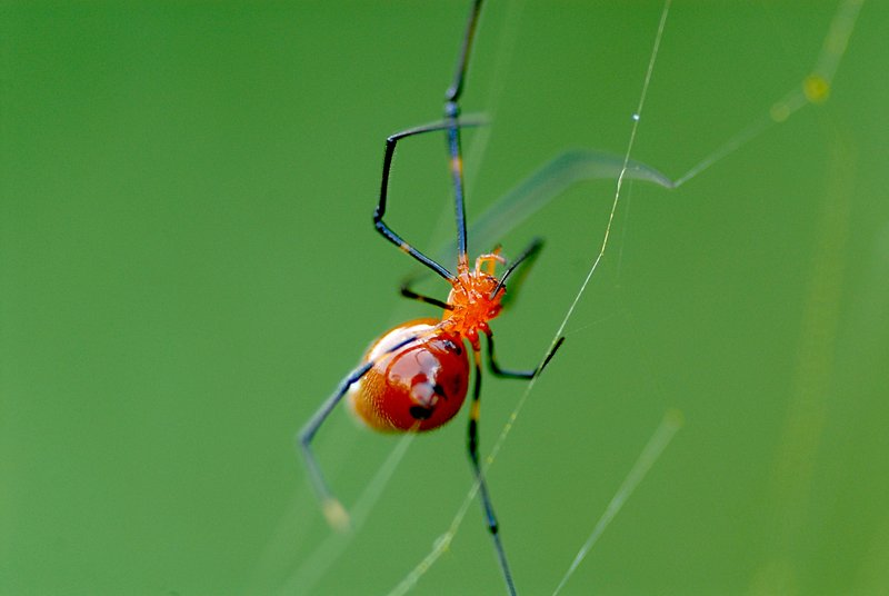 may 27 9497 argyrodes reflection