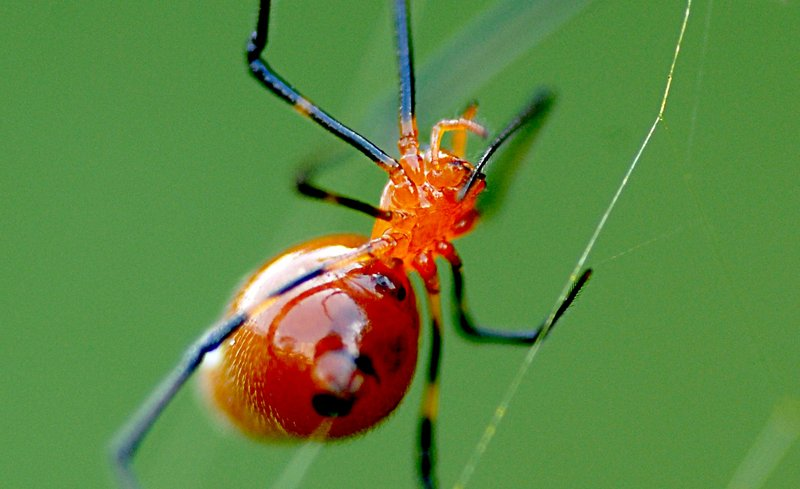 may 27 9497 argyrodes reflection close