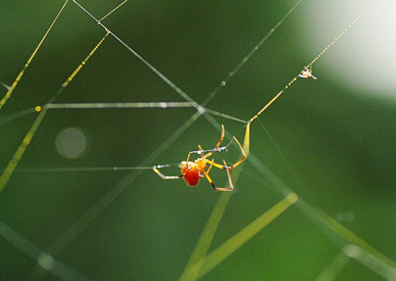 may 27 9707 argyrodes