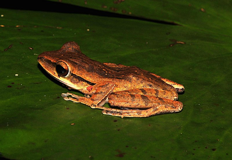 may 28 6951 frog side