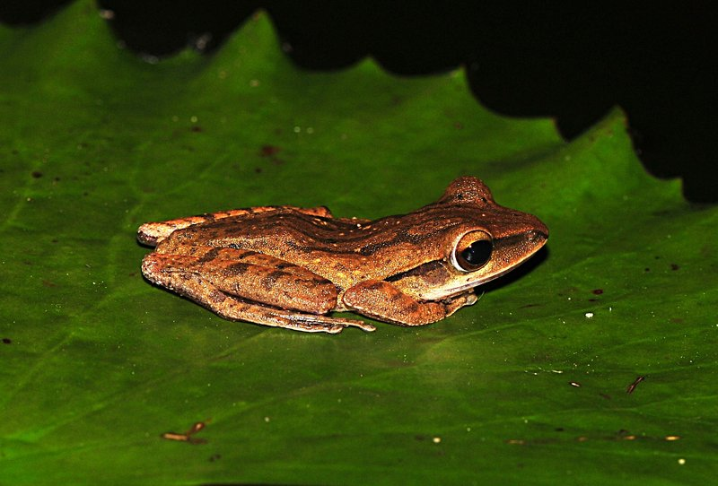 may 28 6962 frog side