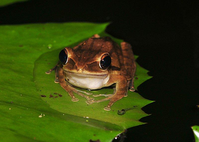 may 28 6968 frog tadpole