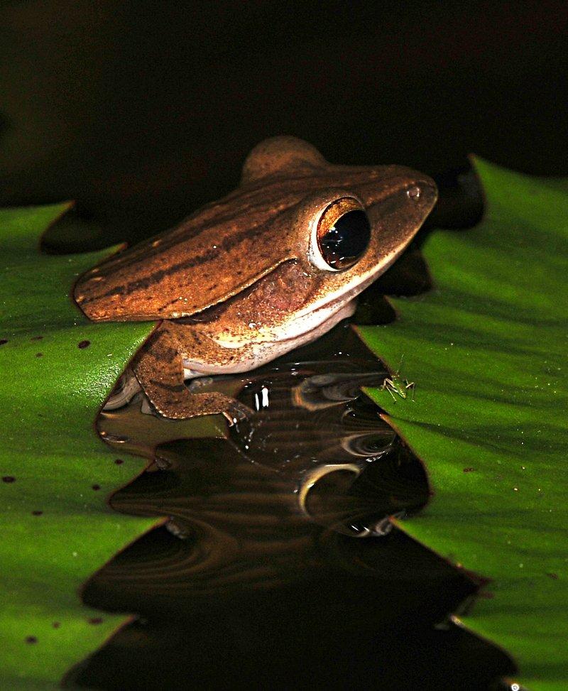 may 28 6971 frog reflection