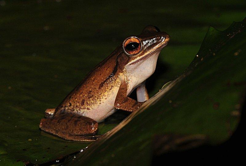 may 28 6989 frog eyes
