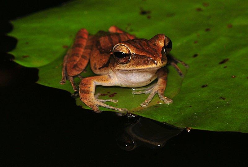 may 28 6990 frog eyes