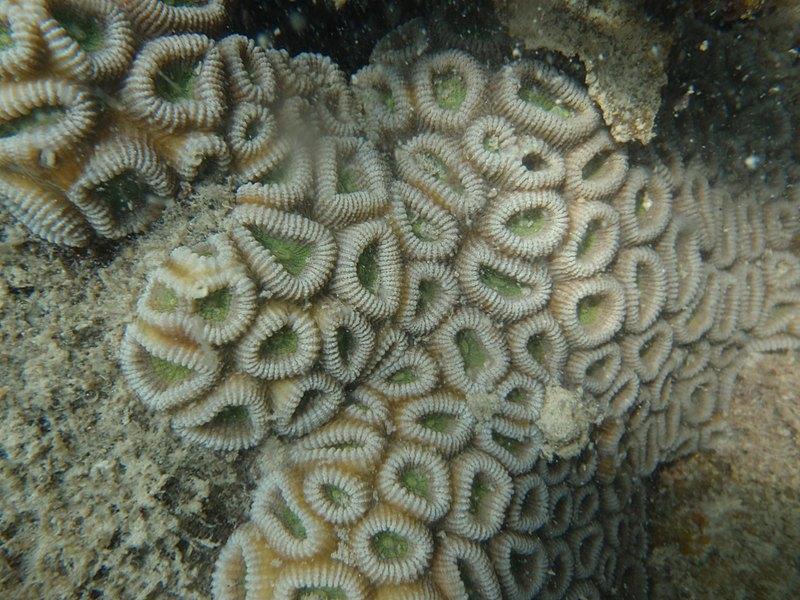 may 29 0158 coral