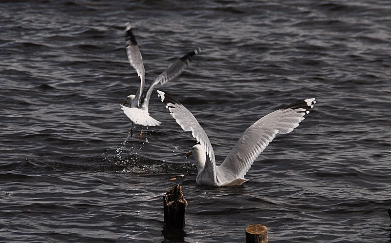 may 29 5747 lake birds