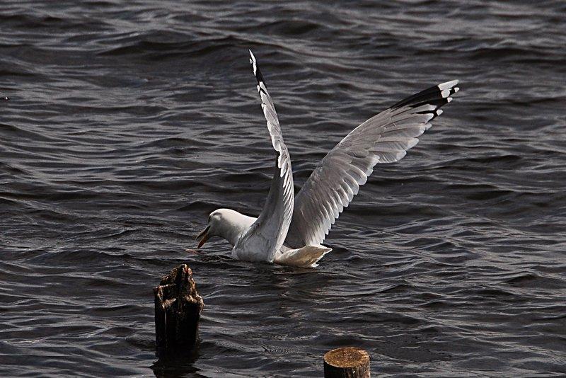 may 29 5748 lake bird