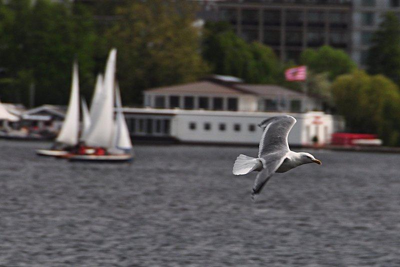 may 29 5753 lake bird sailboat