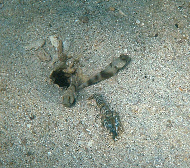 may 30 0584 crawfish