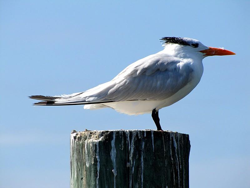 nov 01 0297 sea bird